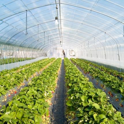 Израелско фолио за оранжерии